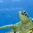 Turtle by MotHaiBaPhoto Dmitry & Olga