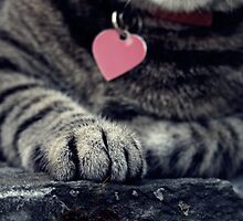 The cat has too much spirit to have no heart. by A Postcard from Heaven Photography