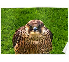 Hawk #1 Poster
