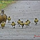 &quot; Come along girls, keep up! by Malcolm Chant