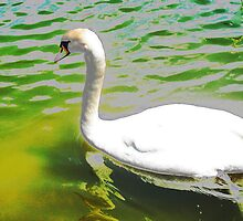 The swan and the aquamarine lake by ♥⊱ B. Randi Bailey