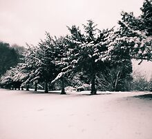 Snow Trees by Claire Elford