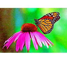 Monarch (butterfly) Photographic Print
