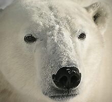 White face looking forward by Owed to Nature