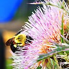 Bumblebee in a Thistle by Robert MacGowan
