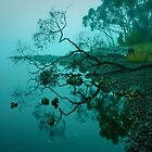 Reflected by Ian Stevenson