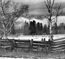 Winters Rest in Black and White by Bauerphoto
