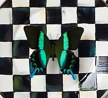 Butterfly on checker plate by Garry Gay