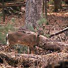 hunters gaze by rljphotography