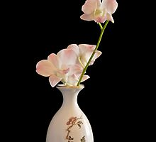 Pink Orchids by traveller
