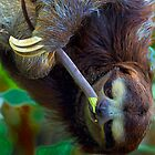 Snacking Sloth by Ron Deage