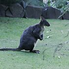 wallaby profile by mooksool