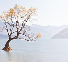Golden - Lake Wanaka - New Zealand by Kimball Chen