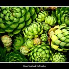 Hens &amp; Chicks #1 by Rose Santuci-Sofranko