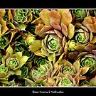 Hens & Chicks #2 by Rose Santuci-Sofranko