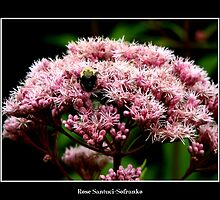 Pink Flower and bee by Rose Santuci-Sofranko
