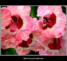 Gladiolas #2 by Rose Santuci-Sofranko