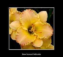 Lilies: Yellow #1 by Rose Santuci-Sofranko