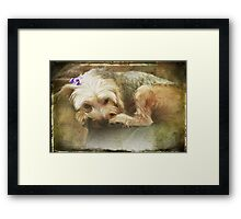 I Hate Bows Framed Print
