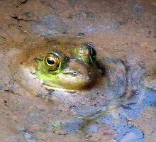 Peeking Peeper In Spring Swamp Water by Jean Gregory  Evans