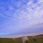 Cornwall: Ponies in the Evening Light by Rob Parsons