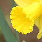 Spring Daffodil by linzi200
