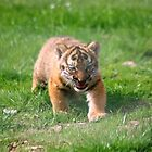 Baby Tiger by linzi200