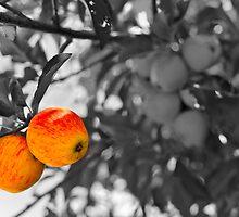 Tasmanian apples by Jillian Bell