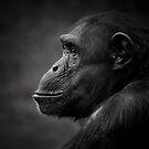Chimpanzee by Natalie Manuel