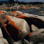 Red Lichen on Rocks by Sea by Jane McDougall