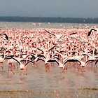 Flamingos by Maya Hiort Petersen