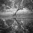Scary Tree- Reflection in a Pond, Harrogate by Ben Loveday