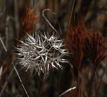 In the Wildgrass by photojeanic