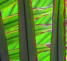 Fan Palm - Kew Gardens by Victoria limerick