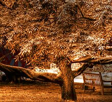 Tree & Bench - Kew Gardens by Victoria limerick