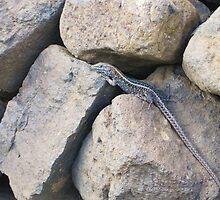 Lizard by Bridget Rust