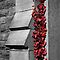 Colour Splash (Selective Colouring only)