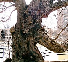 Willow tree on the banks of the Rideau River, Ottawa by Shulie1
