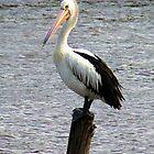 Pelican On A Pole by Liza Barlow