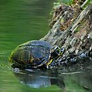 Yellow Slider Going Up by Joe Jennelle
