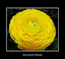 Yellow Ranunculus by Rose Santuci-Sofranko