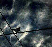Where To Fly? by Rishabh Malviya