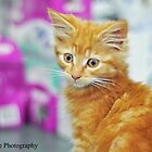 Ginger Kitten (2) by Georgia Rose Smith