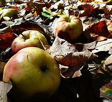 Fall Apples by BonnieToll