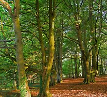 Aggs Hill Woods, The Cotswolds, England by Giles Clare