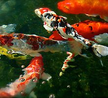 Koi Under Bubbles by Ashley Stevens