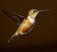 Twilight Hummer  by Chuck Gardner