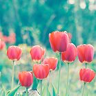 Red Tulip on Aqua by greenzinnia