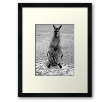 Wild Wallaby & her Joey Framed Print