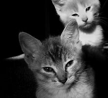 Whiskers on Kittens by Josh Glass